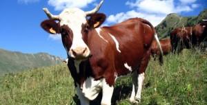 Домашняя ферма - разведение животных и выращивание растений