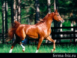 Домашняя лошадь на ферме