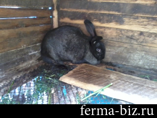 Разведение кроликов, видео