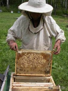 Устройство пчелиной семьи