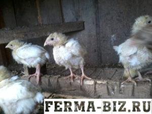 Кормления цыплят бройлеров