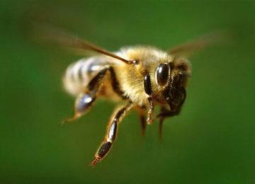 Пчеловодство для начинающих или как стать успешным пчеловодом