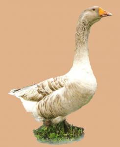 Владимирские глинистые гуси