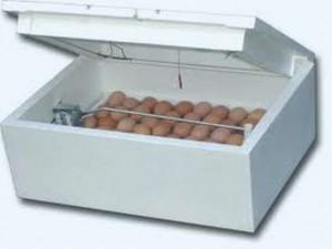 Искусственная инкубация индюшиных яиц