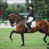 Верховая езда для начинающих