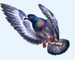 Почта домашних голубей