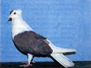 Запорожские чубатые голуби
