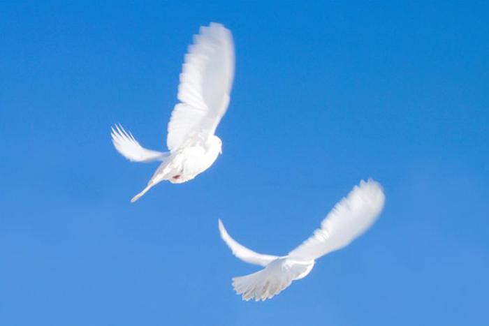 Уход за голубями летом