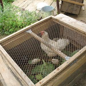 Загон для цыплят своими руками