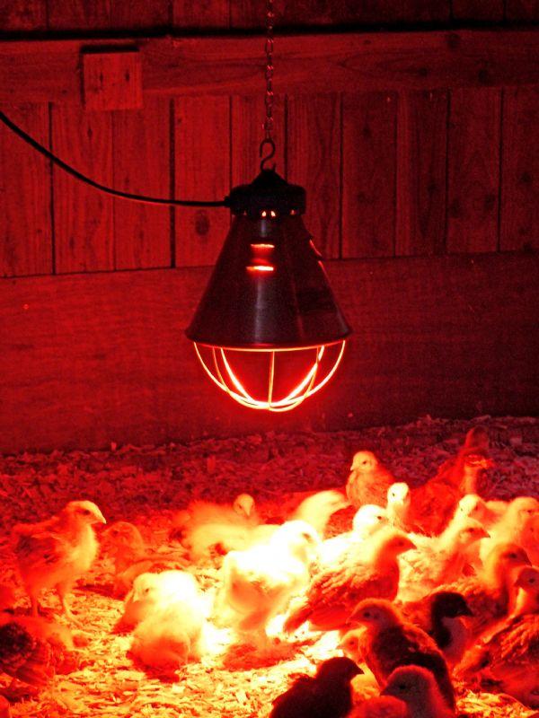 Инфракрасная лампа для цыплят