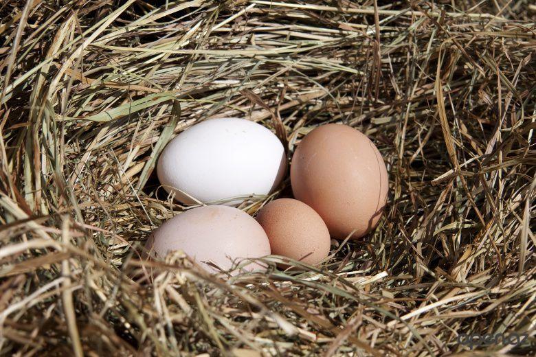 Почему куры несут мелкие яйца