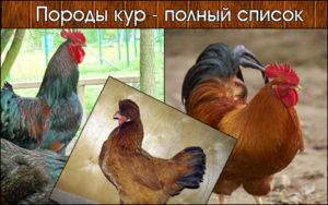 Все породы кур