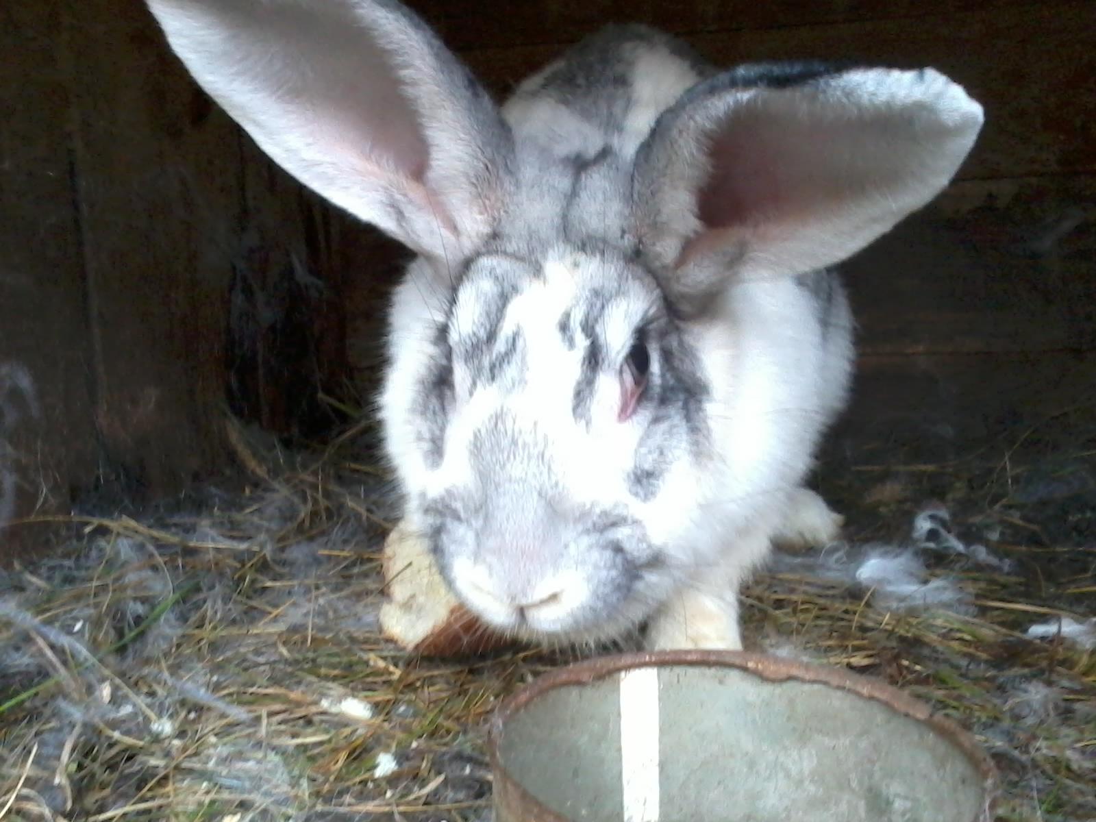 Кролиководство - выгодный бизнес