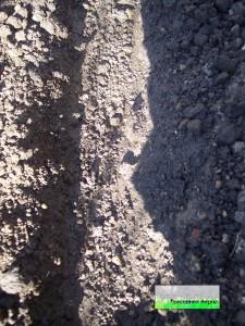 Поготовка почвы к посадке фасоли