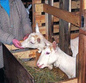 Загон для коз своими руками