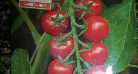 Сорт томата Дюймовочка фото