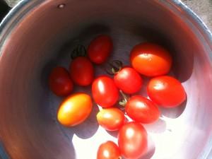 Выращивание томатов видео