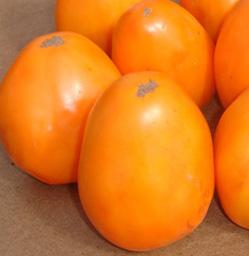 Томат Сорта король оранжевых