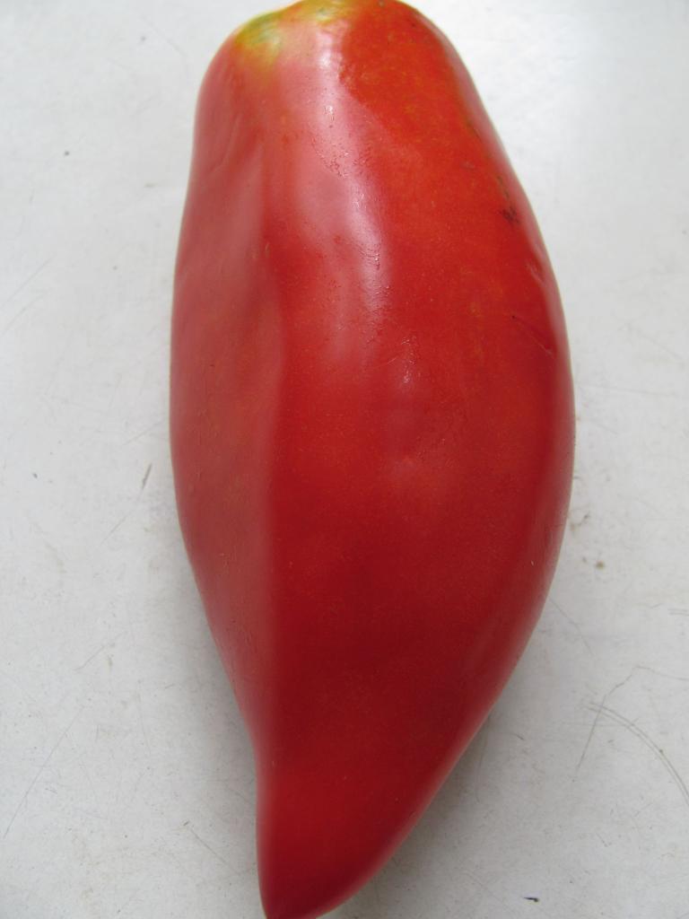 Томат сорта красный клык