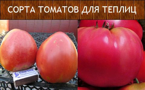 Сорта томатов для теплиц: фото и описание