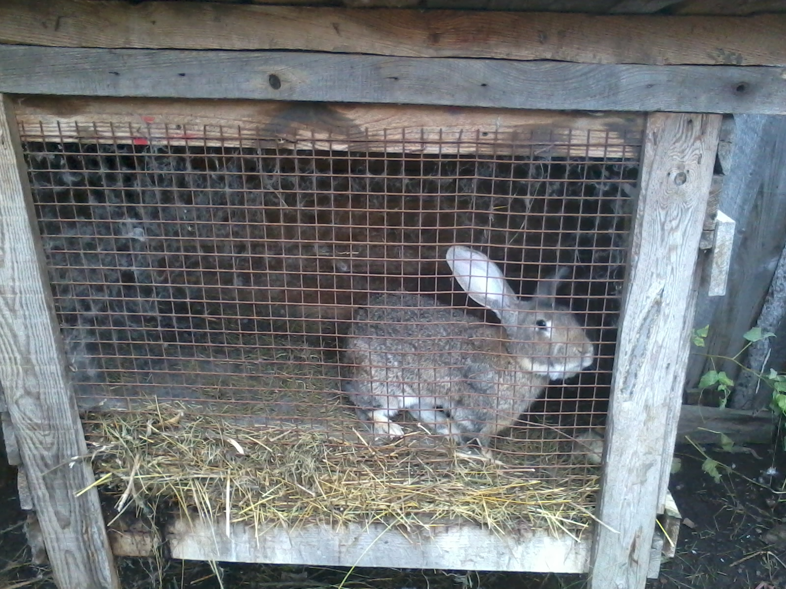 Крольчатник своими руками