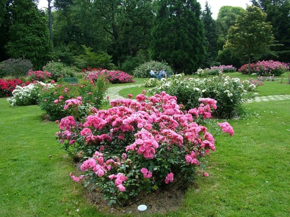 Цветы саду дизайн своими руками фото фото 59