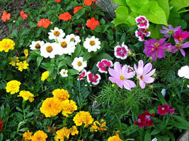 Цветники из однолетних цветов