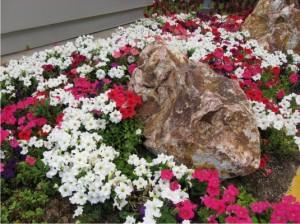 Бело-розовая клумба фото
