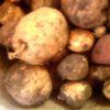 Хранение картофеля: температура