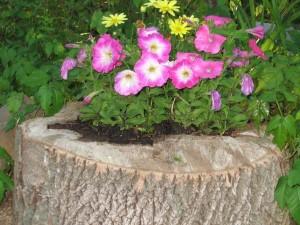 Цветы в пеньке