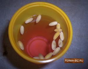 Дезинфекция семян дыни