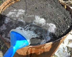 Поливаем почву: Выращивание огурцов в бочке