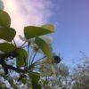 Работы в саду в июне