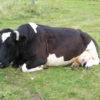 Кормление коров в домашних условиях