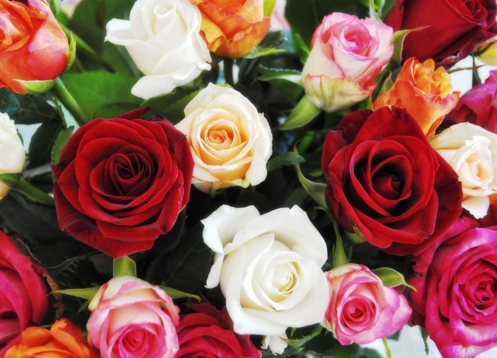 Фото: Букеты роз