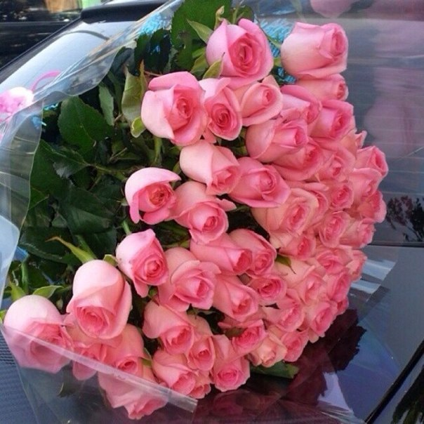 Фото цветов роз букеты