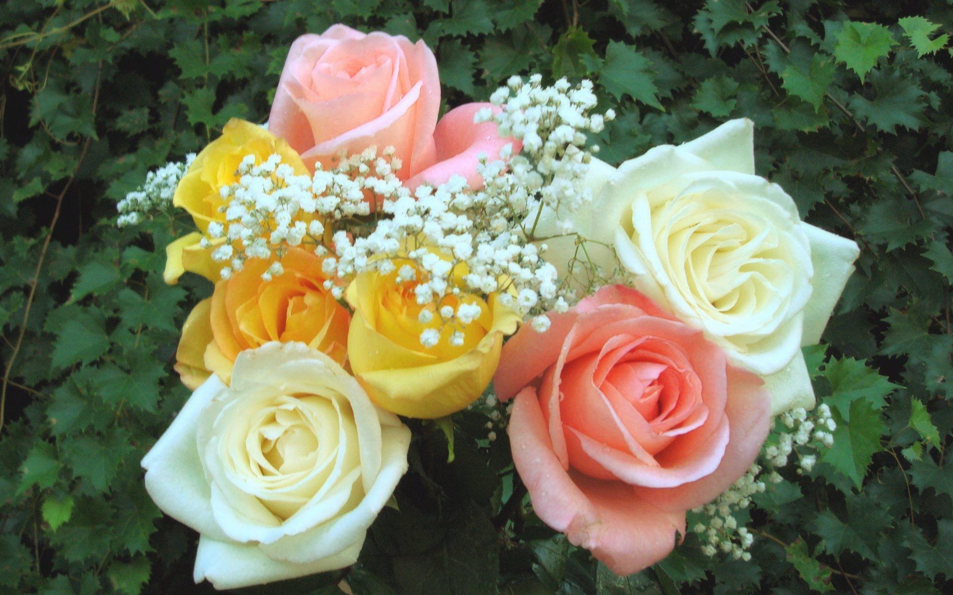 крыши это красивейшие цветы мира открытки троица
