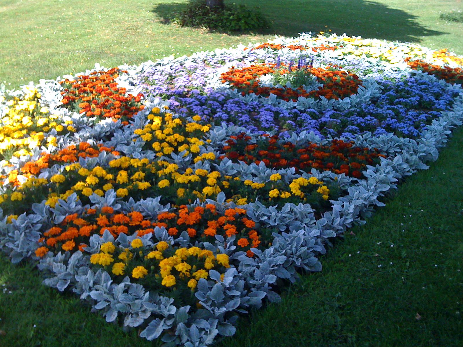 как красиво посадить цветы на клумбе фото билет питанием