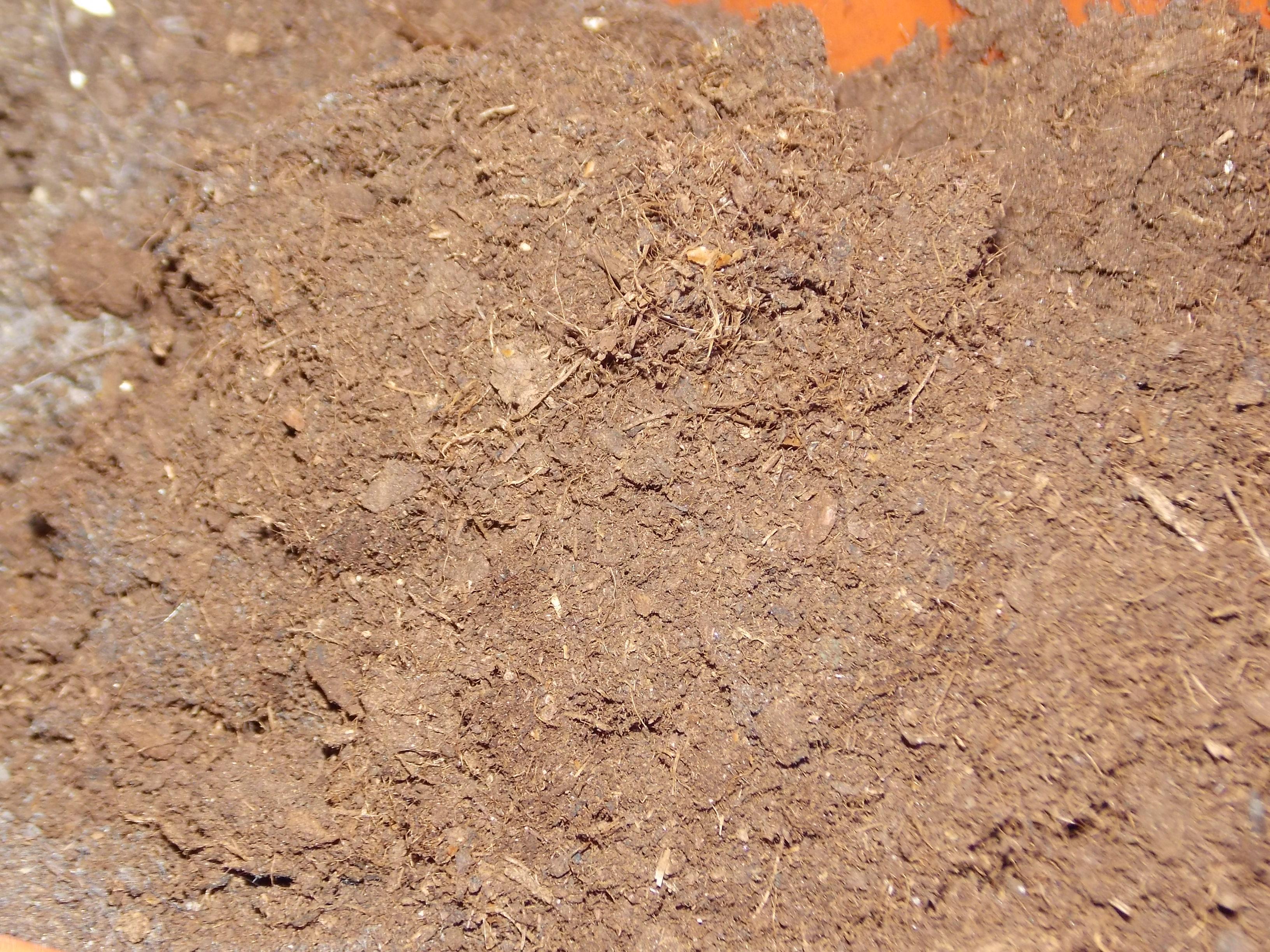 Пикировка петунии: почва