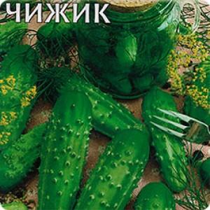 Сорт огурцов Чижик