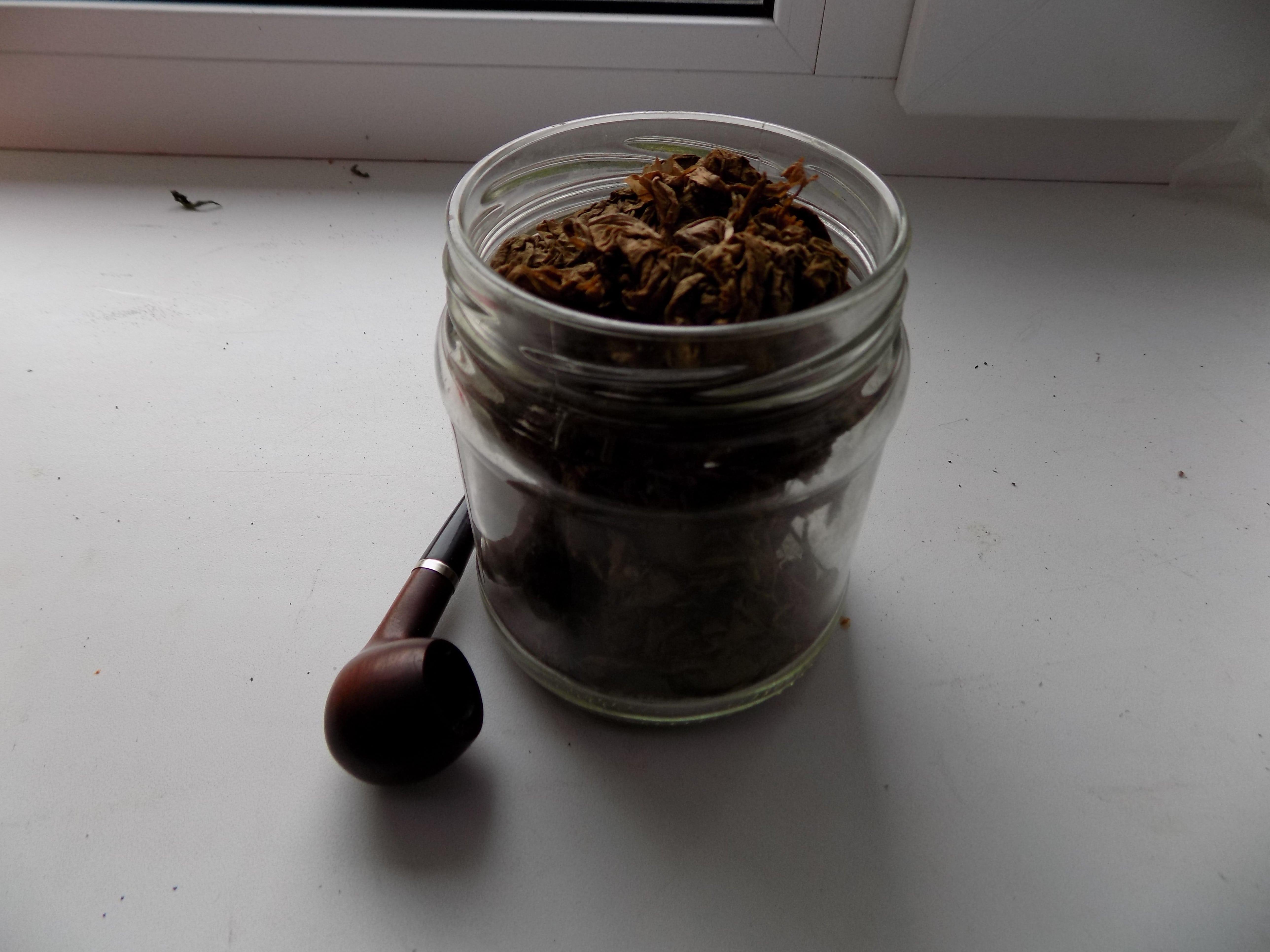 Фото: Ферментация табака в домашних условиях
