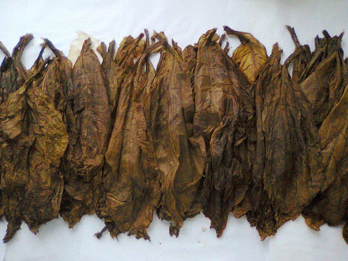 Условия ферментации табака в домашних условиях