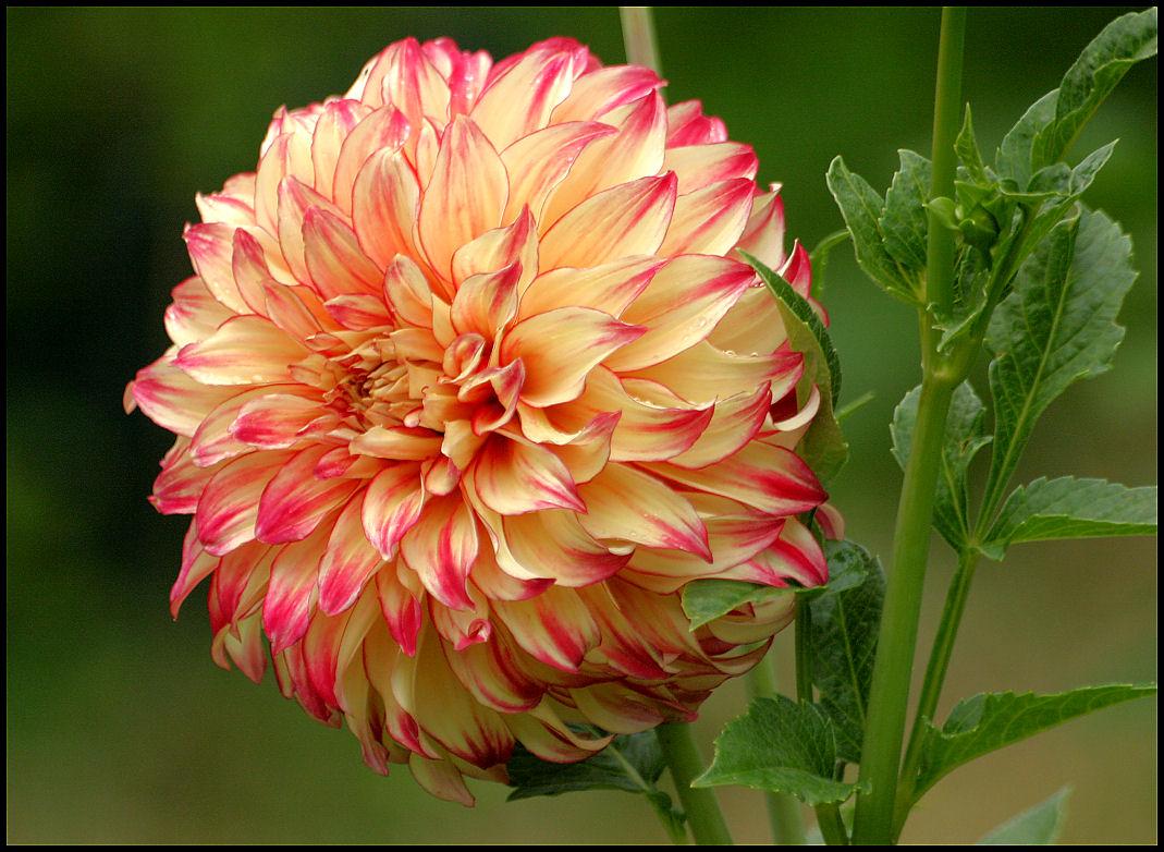 Фото: Красивый цветок