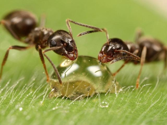 Как избавиться от муравьев на участке народными средствами