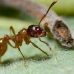 Как избавиться от муравьев на участке? Полезные народные советы.