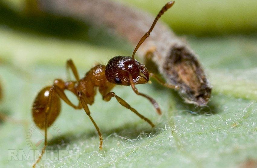 Как избавиться от муравьев на участке - навсегда, народными средствами