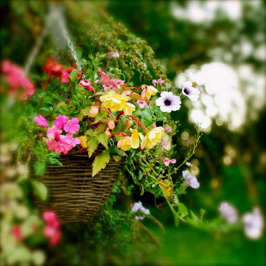 Кашпо для дачных цветов