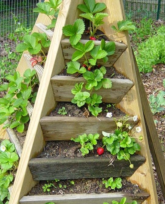 Идеи для огорода своими руками.