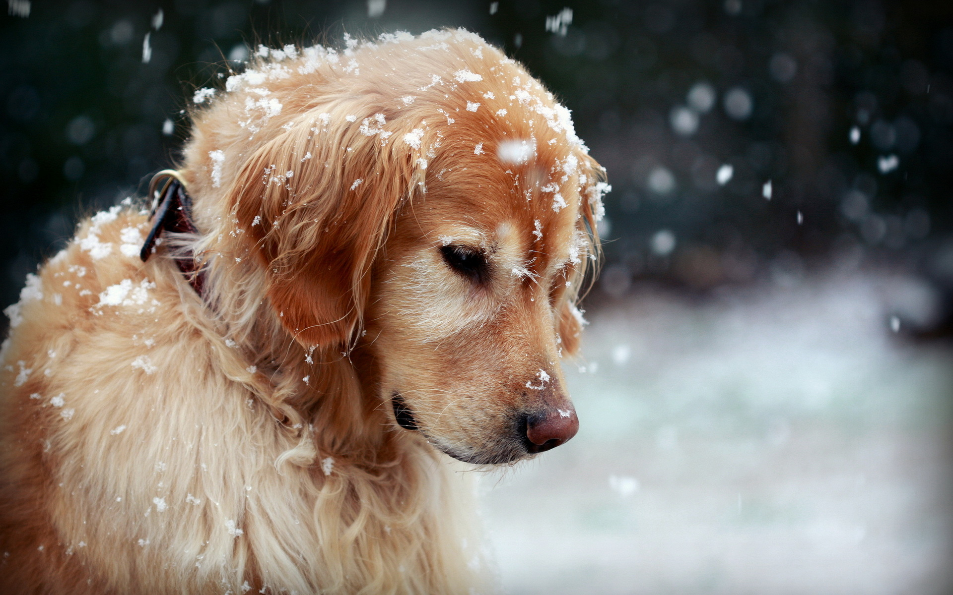 Новогодние картинки 2018 с изображением символа года - Собаки.