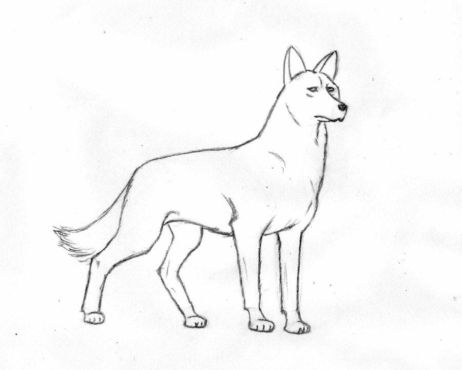 Картинки на Новый год 2018: Собака для срисовки.